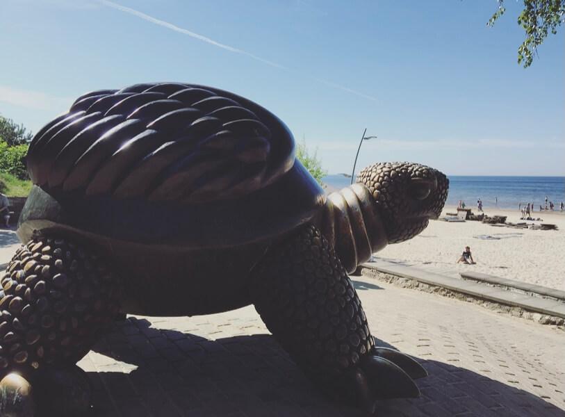 Lettonia, Jurmala, mar Baltico, Majori beach, tartaruga.