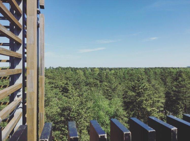 Lettonia, Jurmala, Dzintaru Mezapark, Observation tower.